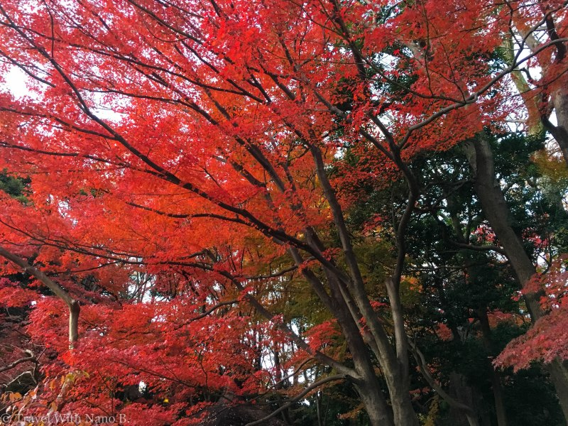 best-gardens-in-tokyo-13 (2)