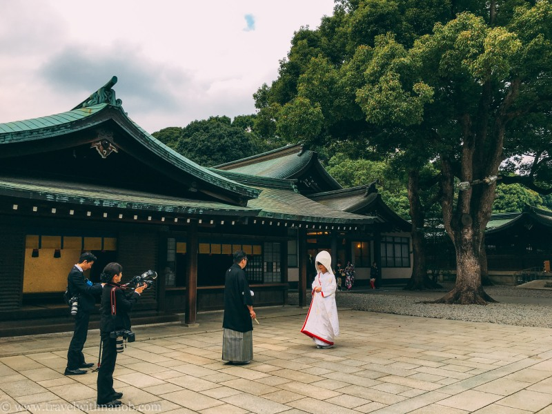 meiji-shrine-2