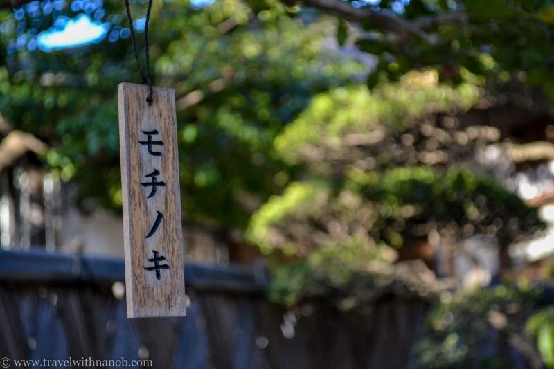 ume-and-sakura-blossom-17