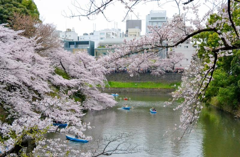 cherry-blossom-tokyo-10