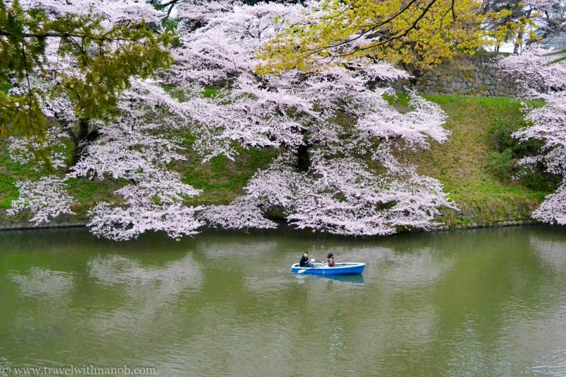 cherry-blossom-tokyo-17