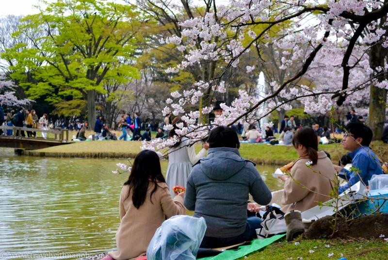 cherry-blossom-tokyo-40
