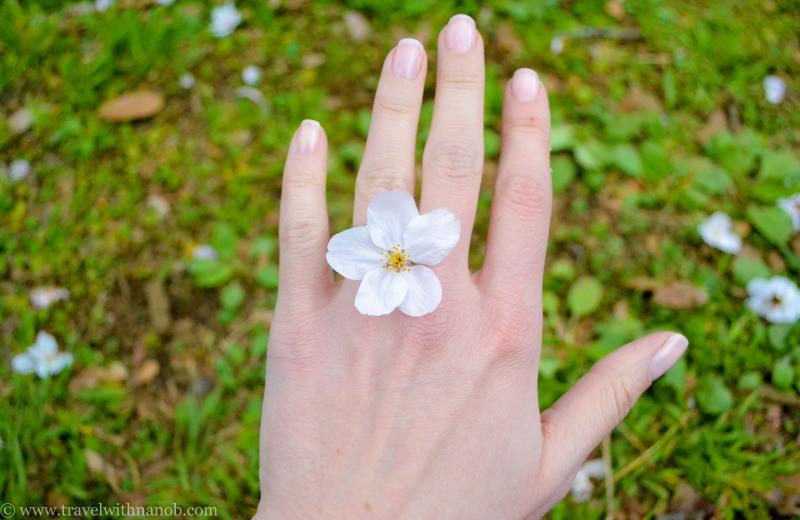 cherry-blossom-tokyo-46