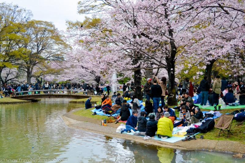 cherry-blossom-tokyo-53