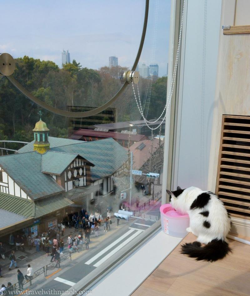 mocha-cat-cafe-10