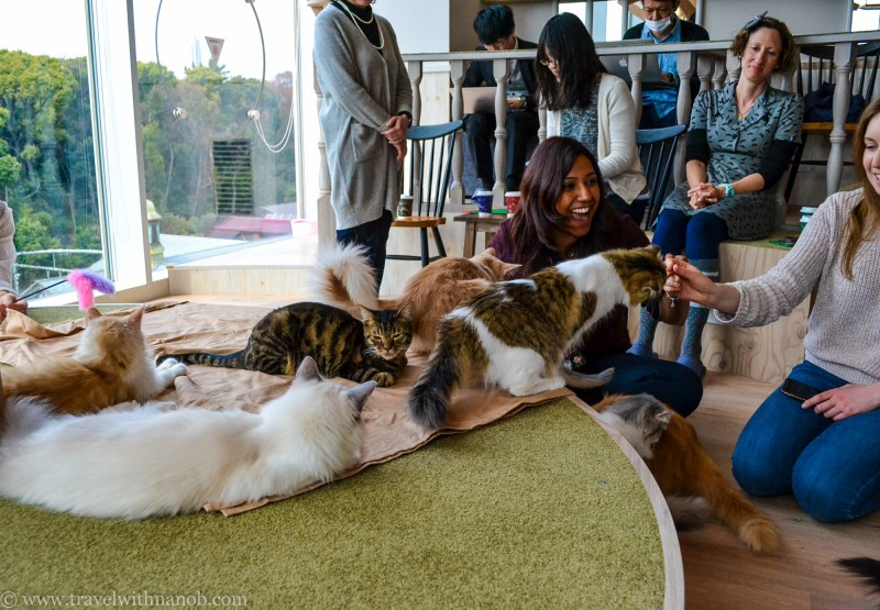 mocha-cat-cafe-4