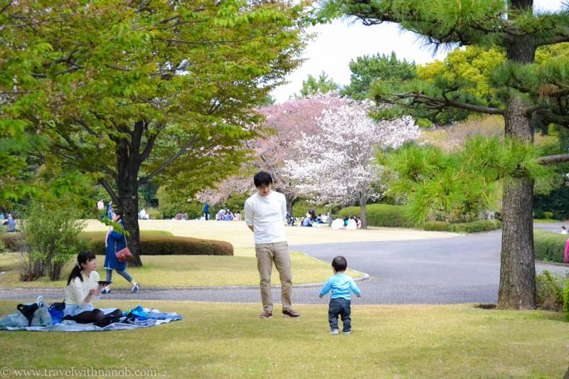 yaezakura-cherry-blossom-3