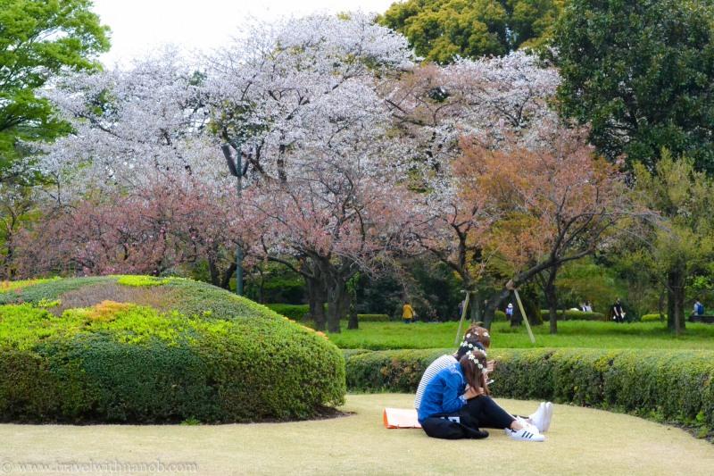 yaezakura-cherry-blossom-5
