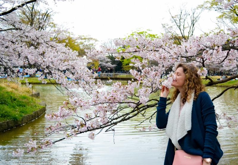 cherry-blossom-tokyo-37