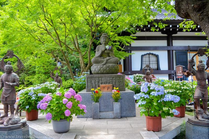hydrangea-in-kamakura-japan-17