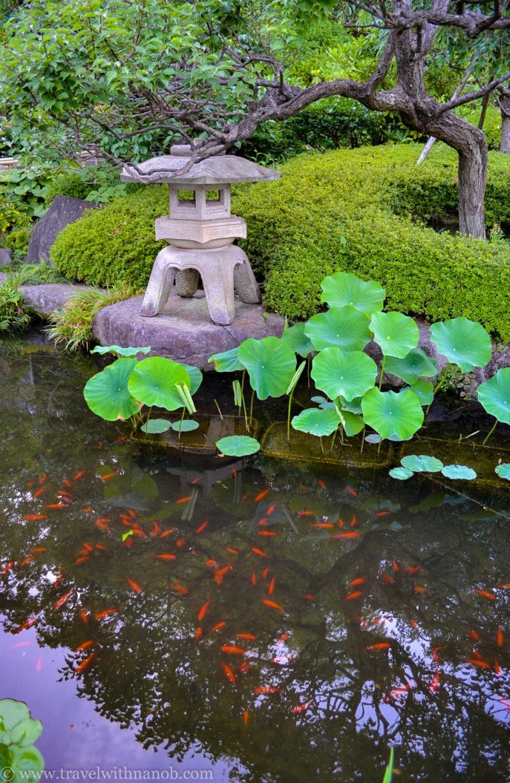hydrangea-in-kamakura-japan-58