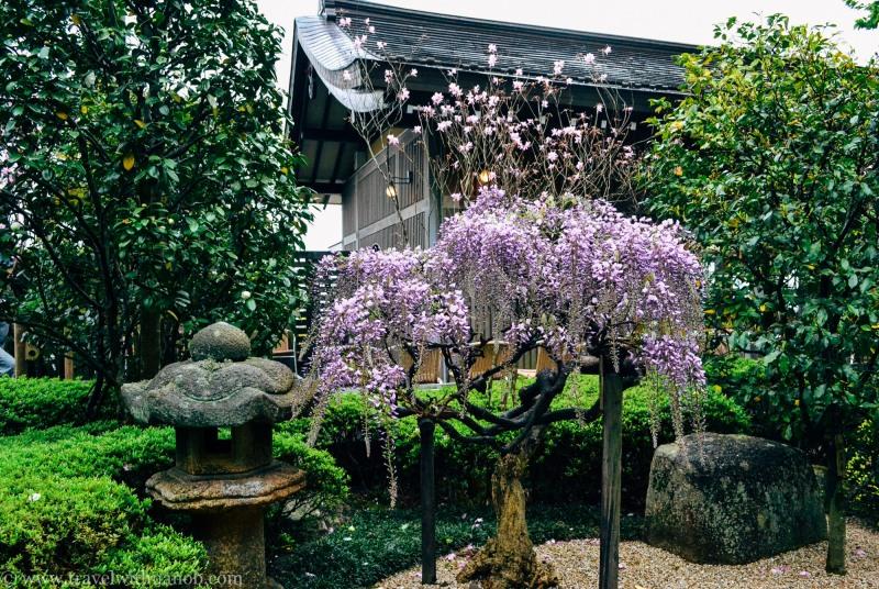 kamakura-guide-japan-46
