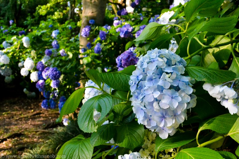 tokyos-best-gardens-17