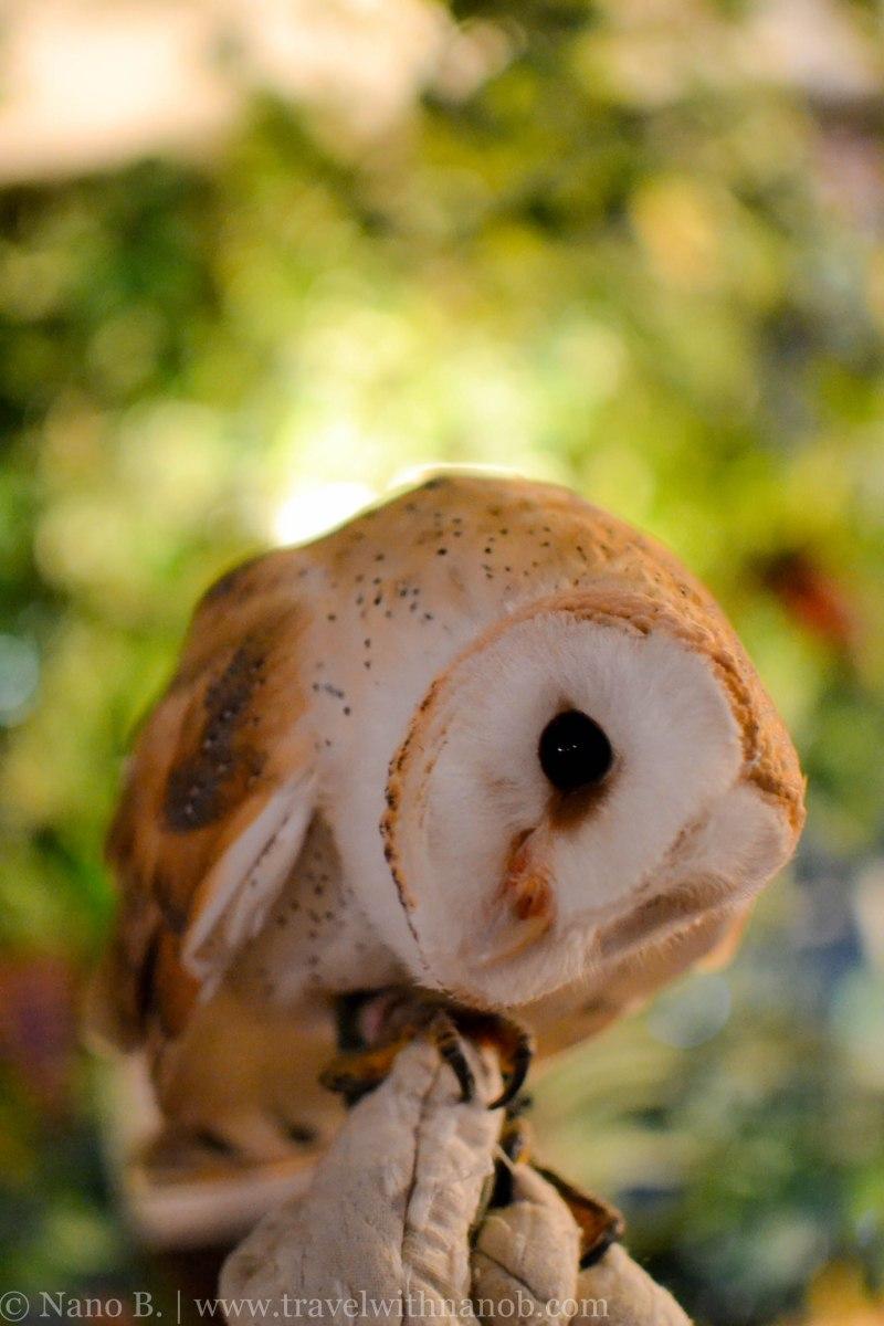 owl-cafe-tokyo-10