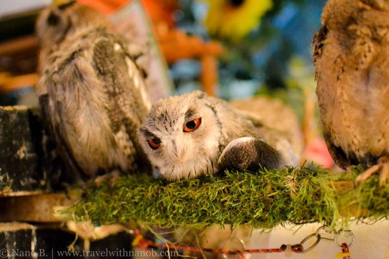 owl-cafe-tokyo-14
