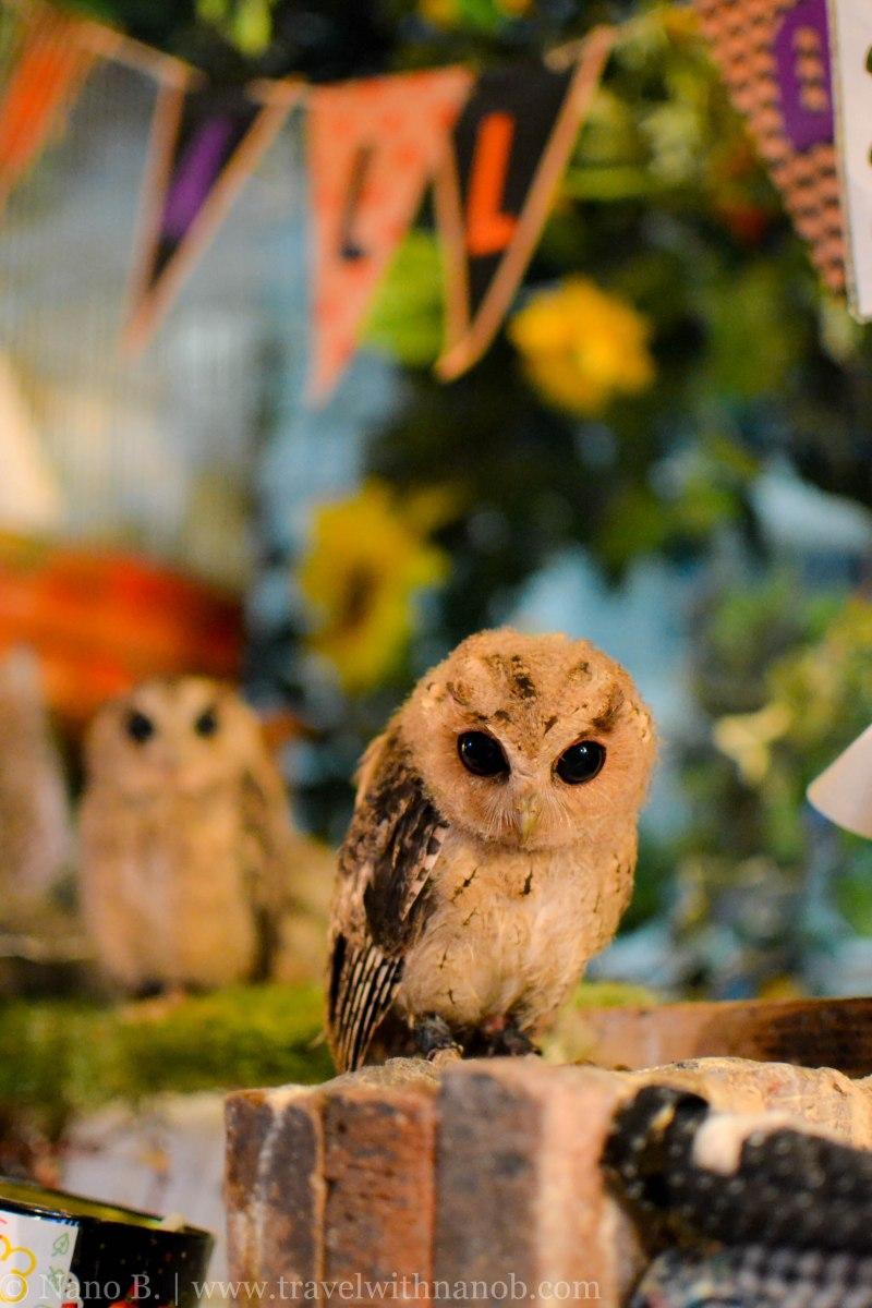 owl-cafe-tokyo-15