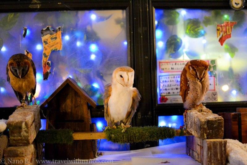 owl-cafe-tokyo-17