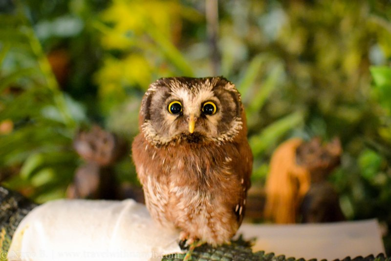 owl-cafe-tokyo-19