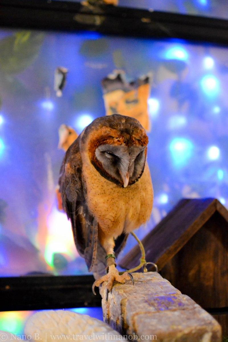 owl-cafe-tokyo-7