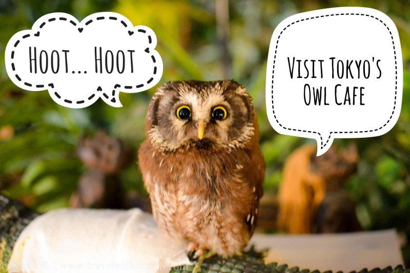 visit-tokyos-owl-cafe-full-story-on-www-travelwithnanob-com