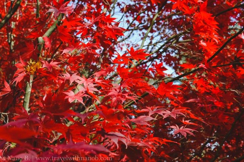 fall-in-usa-17