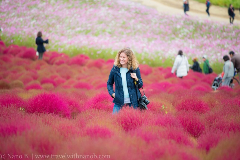kochia-hitachi-seaside-park-10