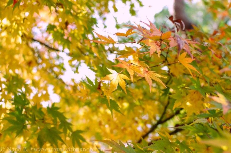 arashiyama-kyoto-10