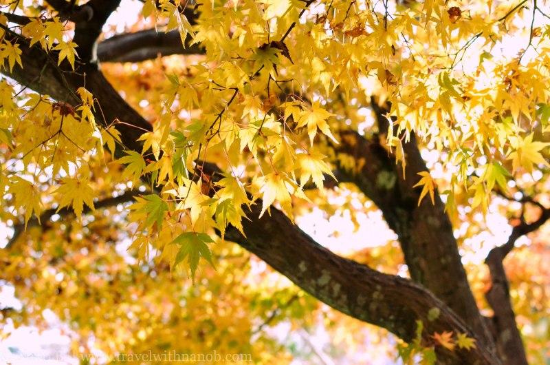 arashiyama-kyoto-11