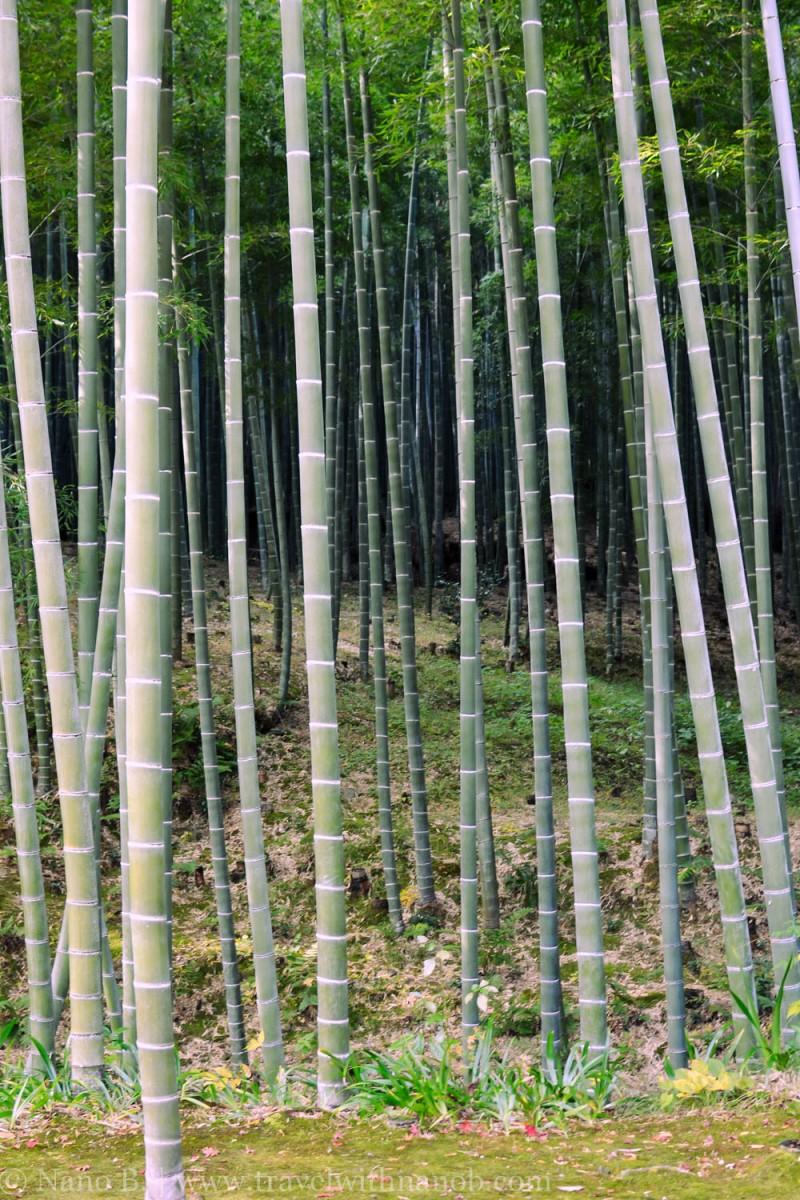 arashiyama-kyoto-21