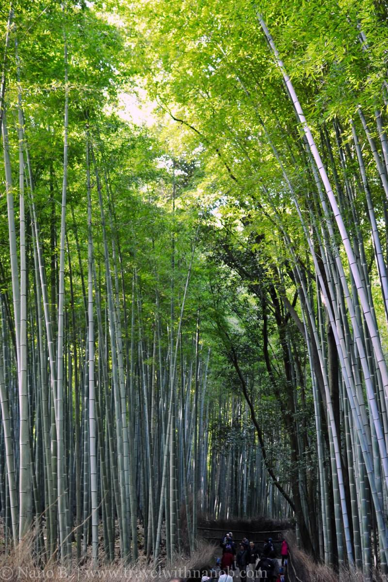 arashiyama-kyoto-23