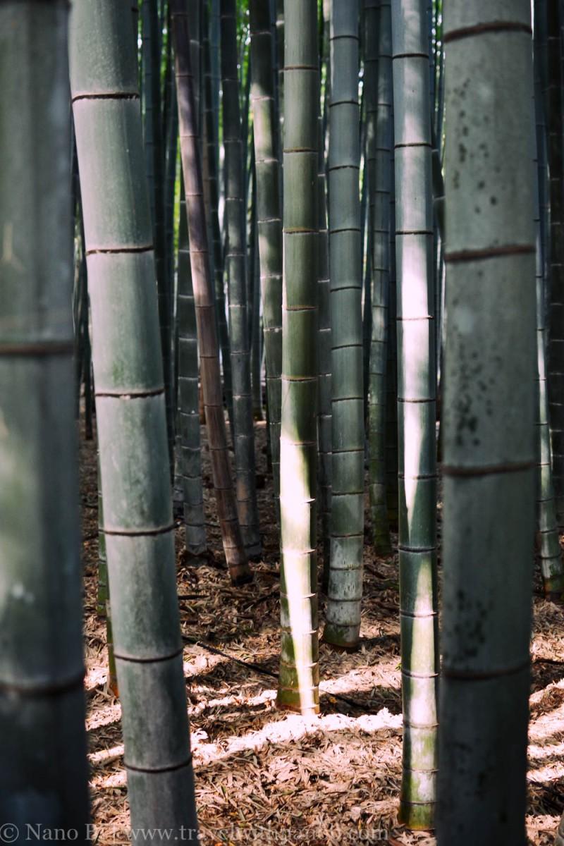 arashiyama-kyoto-24