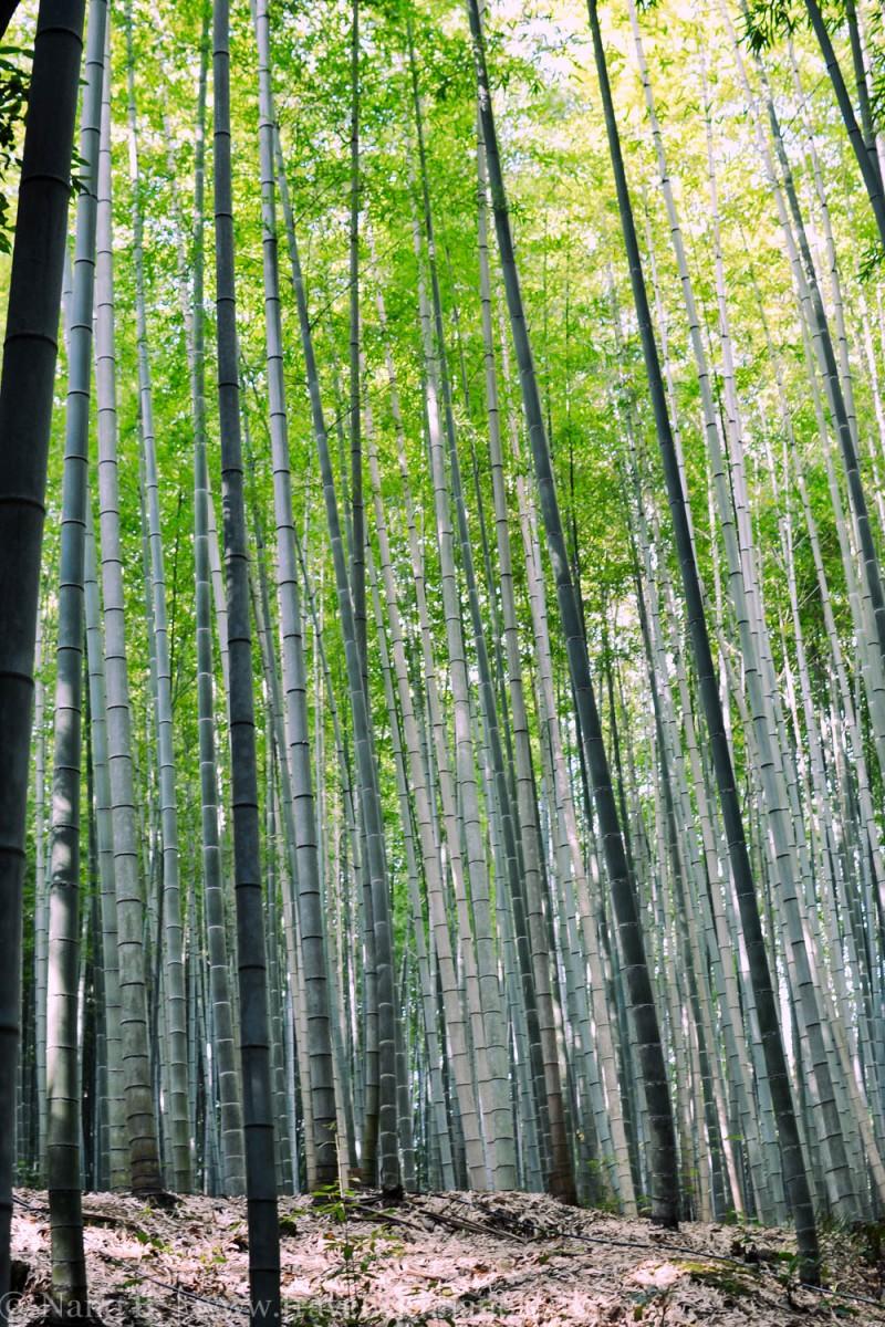 arashiyama-kyoto-28