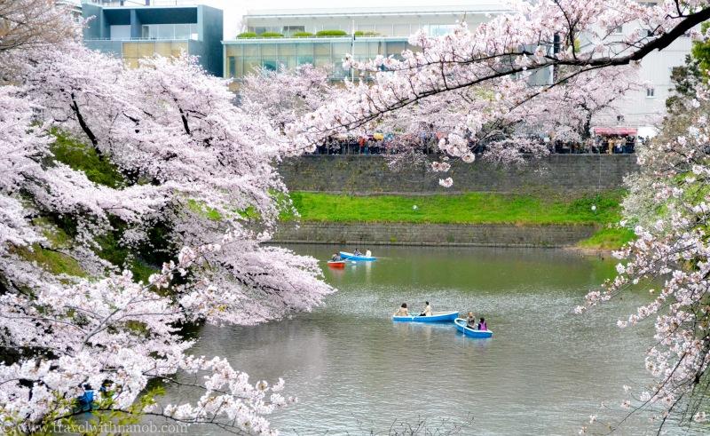 cherry-blossom-tokyo-9