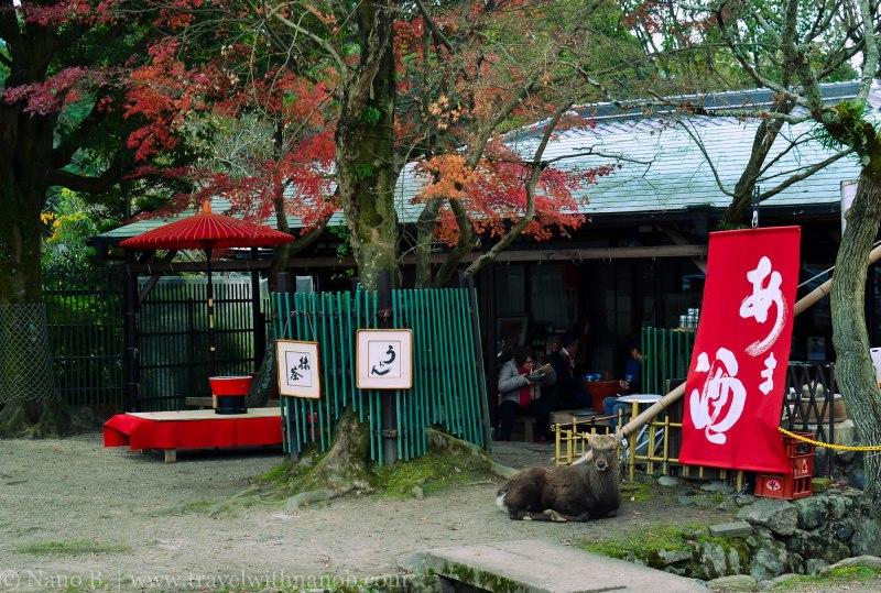 day-trip-to-nara-japan-19
