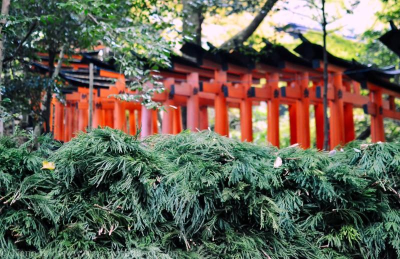 fushimi-inari-taisha-kyoto-13