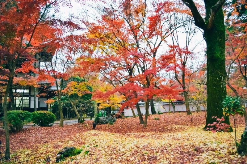 eikando-kyoto-19