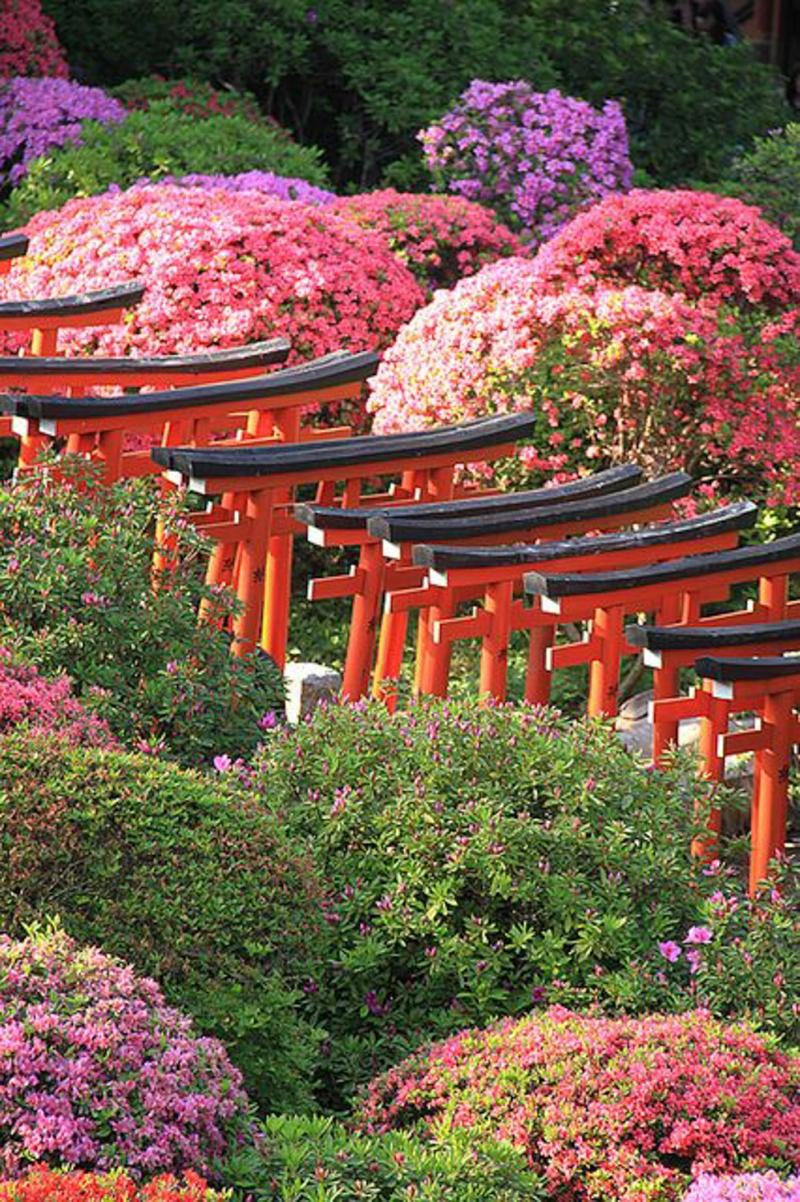 japan-flower-festivals-11