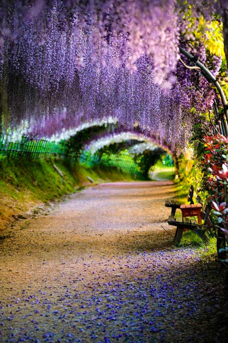 japan-flower-festivals-12