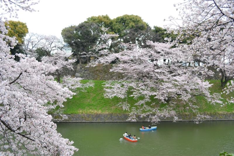 japan-flower-festivals-2