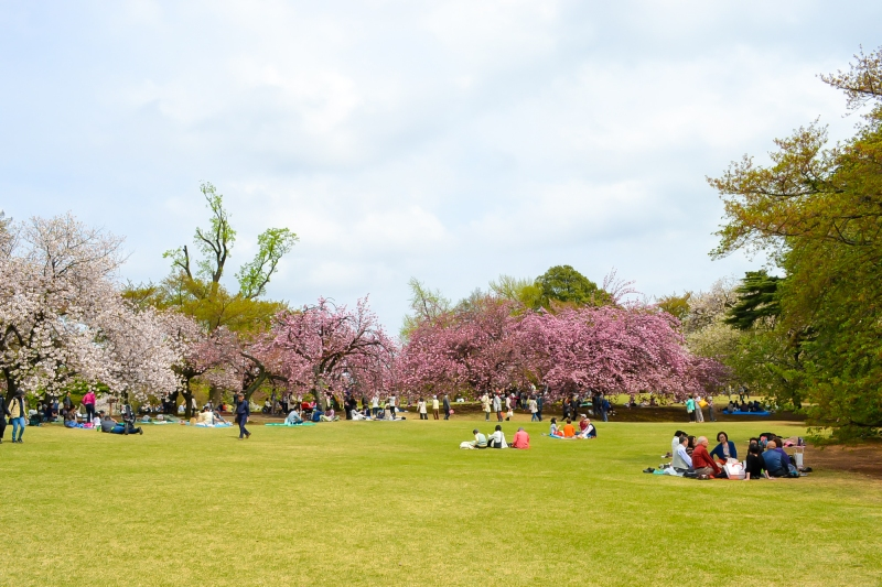 japan-flower-festivals-5
