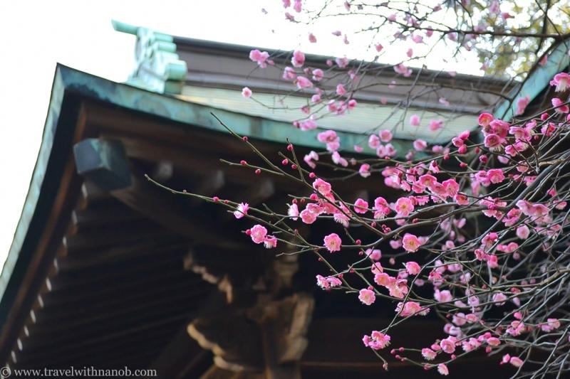 japan-flower-festivals