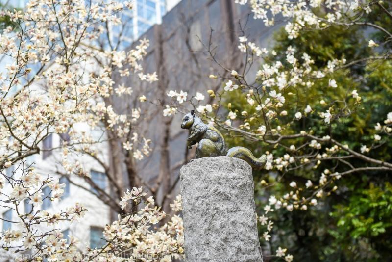 cherry-blossom-tokyo-1