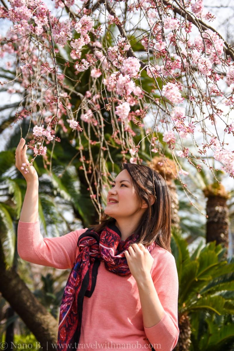 cherry-blossom-tokyo-24