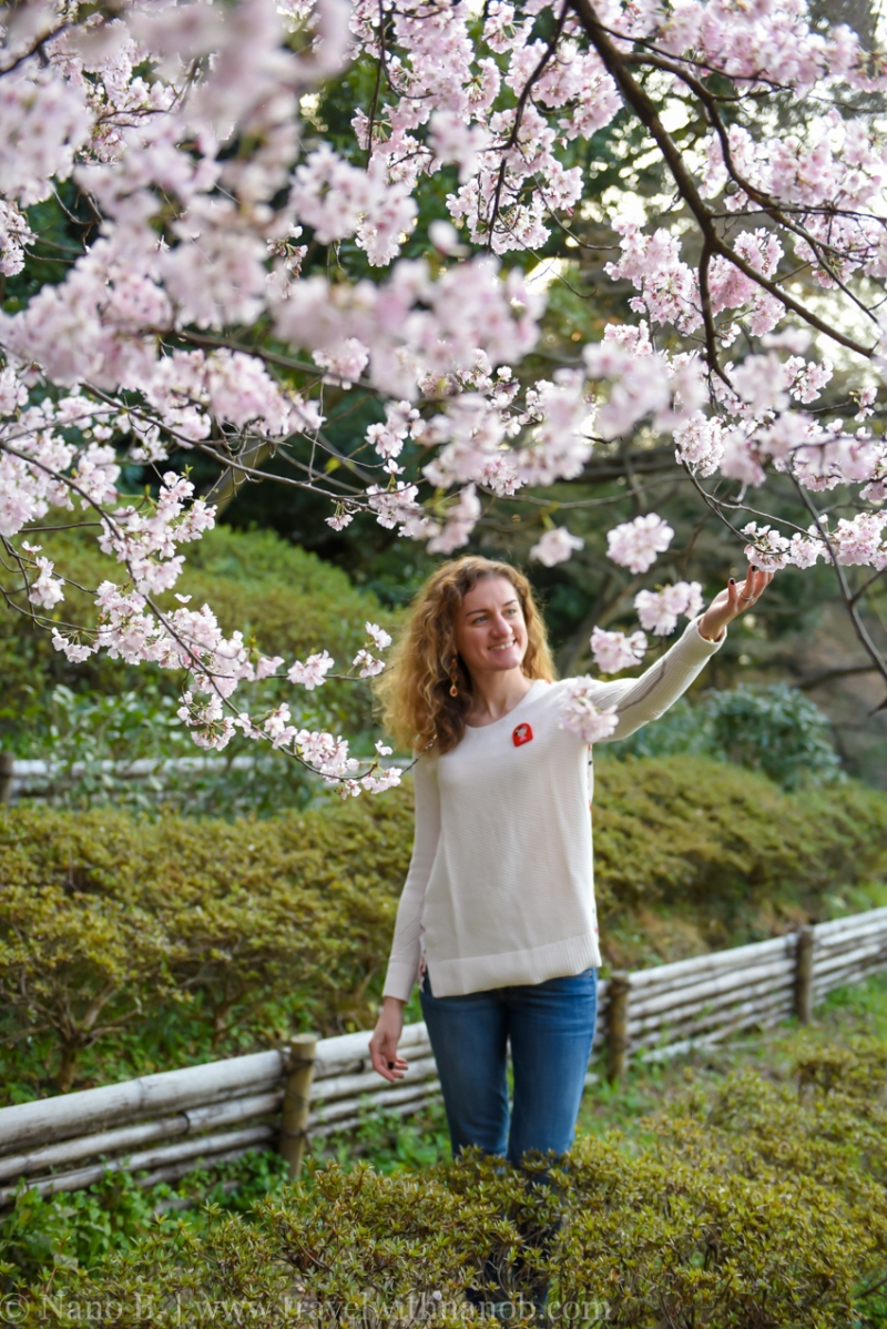 cherry-blossom-tokyo-58