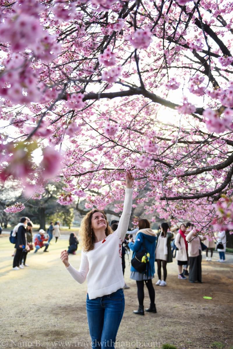 cherry-blossom-tokyo-67