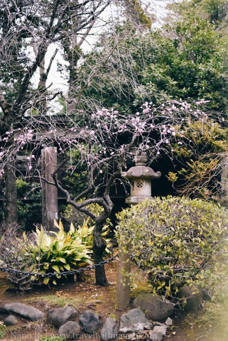 tokyo-shrines-20