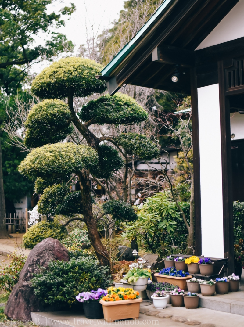tokyo-shrines-22