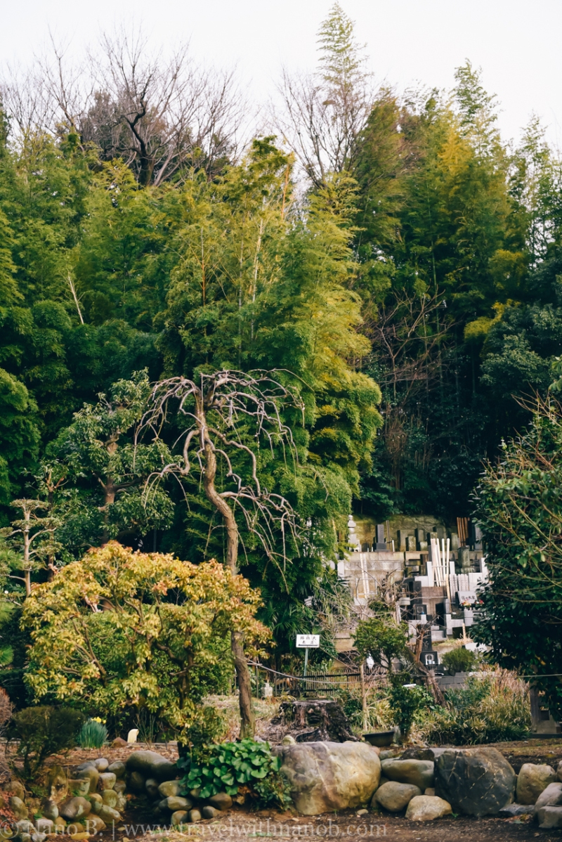 tokyo-shrines-28