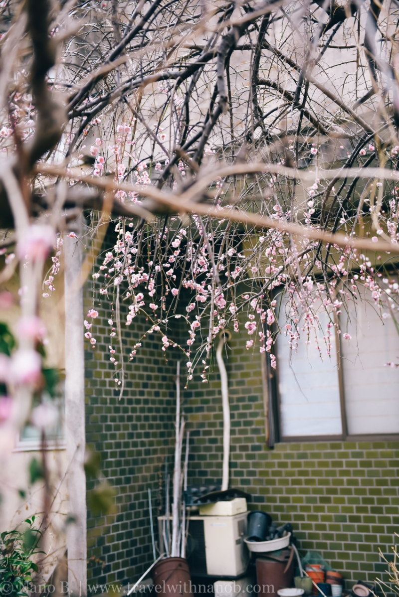 tokyo-shrines-30