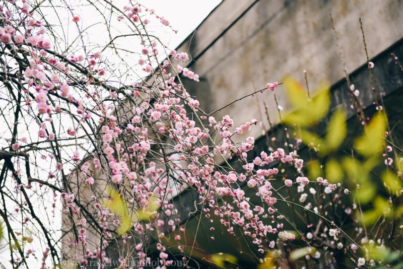 tokyo-shrines-31